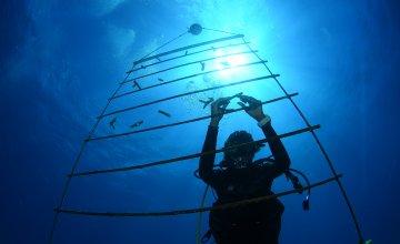 Korallen-Aufzuchtstation in den Krollenriffzonen von St Maarten